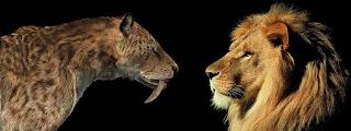 smilodon vs leon