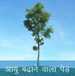आयु बढ़ाने वाला पेड़ - Akbar Funny Hindi Stories