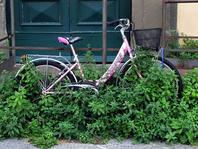 Bicycle overgrown with weeds, scali delle Ancore, Livorno