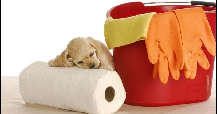 3 Natural Homemade Cleaner How To Get Dog Poop Smell Out