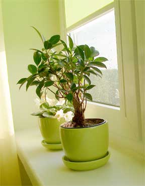 hosue plants