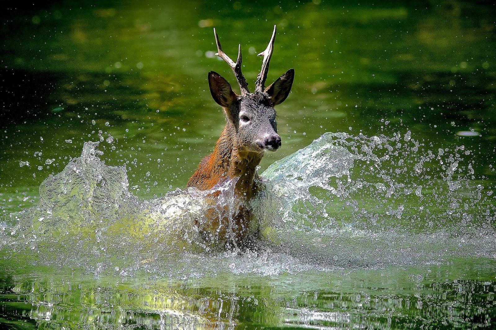 beautiful frog wallpaper download for free: beautiful deer animals