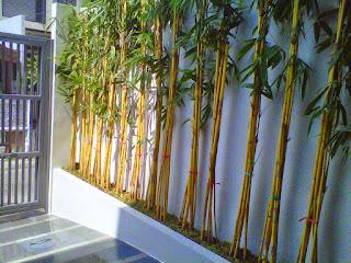 Bambukuningpanda