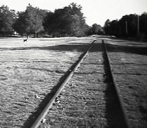 Southbound Yellow Dawg tracks