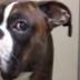 Esta familia vuelve de vacaciones y graba la reacción de su perro