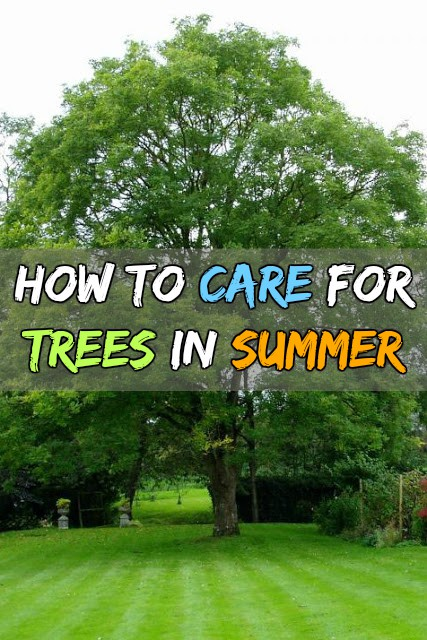trees care tips