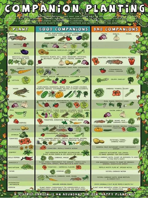 When Plant Vegetables Calendar Zone 4