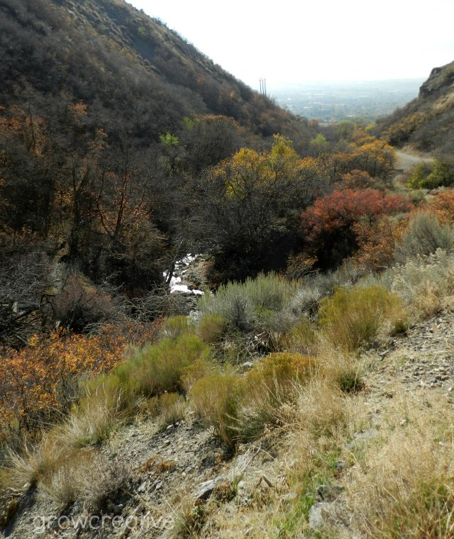 Grove Creek Canyon, Pleasant Grove UT- in fall color