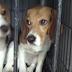 Rescatan perritos de un laboratorio, su reacción es realmente emocionante