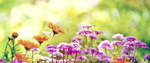 Probiotics reduce spring allergies