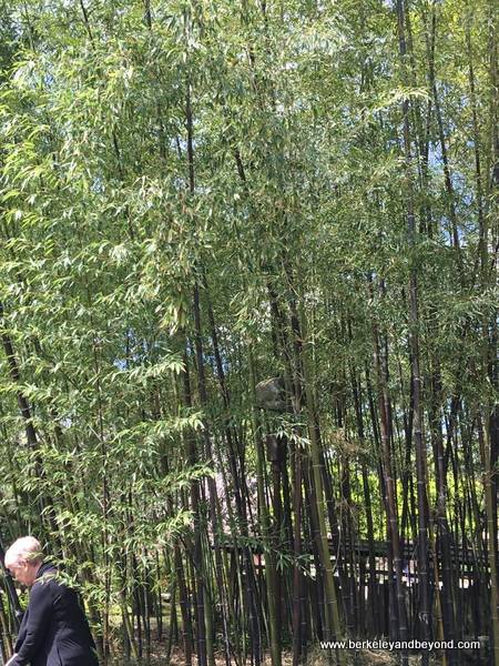 Bamboo Garden at Hakone Gardens in Saratoga, California