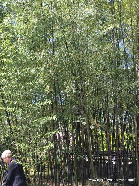 Bamboo Garden at Hakone Gardens in Saratoga, California