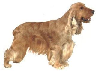 razas de perros pequeños cocker spaniel