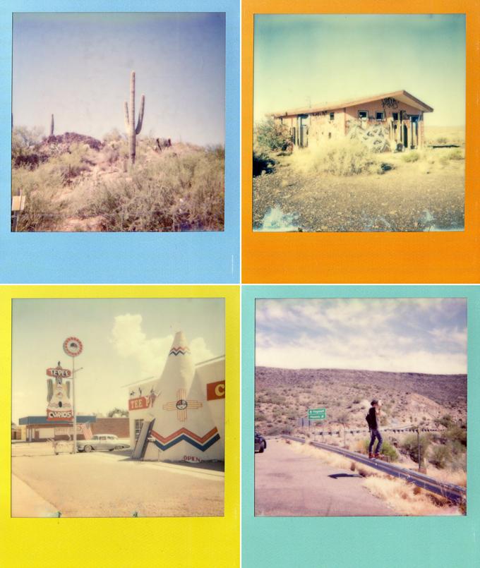 polaroid, instant photo, polaroids, cactus