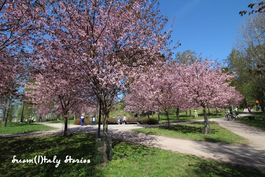 Suom i taly stories il parco dei ciliegi in fiore for Capitale finlandese