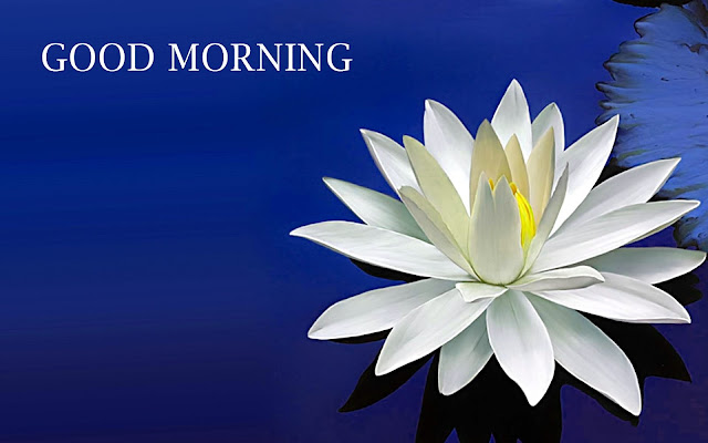 Good Morning Wishes Quotes for You