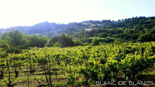 Aamulenkki Toscanassa - www.blancdeblancs.fi