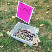 """Photo of a plastic crate of Italian plums along the side of the road with a sign that says """"FREE Italian Plums"""" next to it. https://trimazing.com/"""