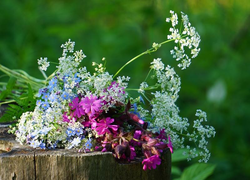 kukkakimppu, luonnonkukat