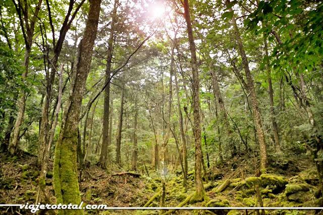 Aokigahara - Excursión con Turismo Victoria