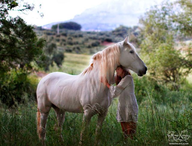 koirakuvaus, hevoskuvaus, lemmikkikuvaus, valokuvaus, eläinkuvaus, koirakuvaaja