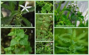 Indonesia ialah salah satu Negara yang dikenal dengan kekayaan alamnya Aneka tumbuhan obat di Indonesia