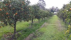 fruit -  tree