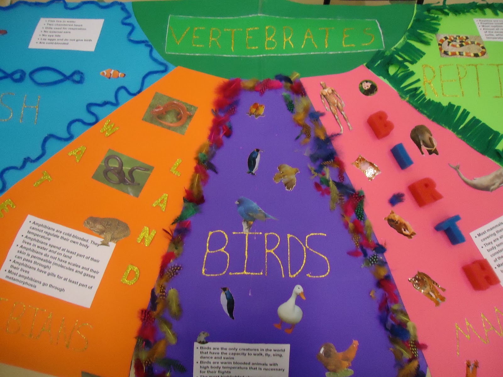 vertebrates  lesson pl...