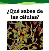 http://www.juntadeandalucia.es/averroes/centros-tic/41009470/helvia/aula/archivos/repositorio/0/190/html/recursos/la/U01/pages/recursos/143175_P08_1.html