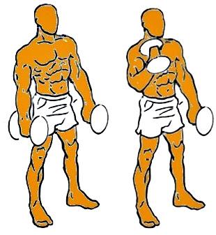 Curl martillo mancuernas ejercicio hombre rutina pesas