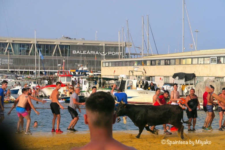 スペインの海の牛追い祭りで海の中に牛を誘う人々