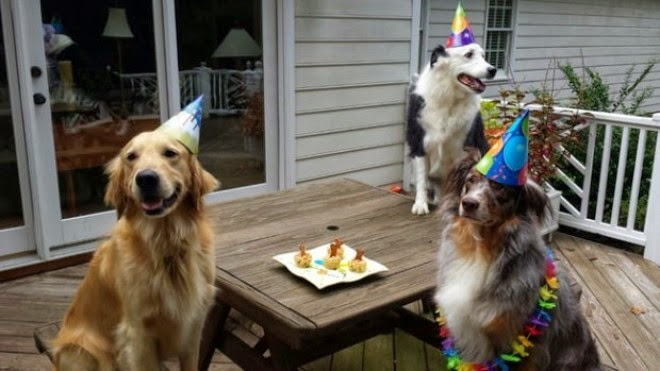 If you have 57 people in a room, there's a 99% probability that at least two of them share a birthday. - 25 Unbelievable Facts That Sound Wrong But Are 100% True