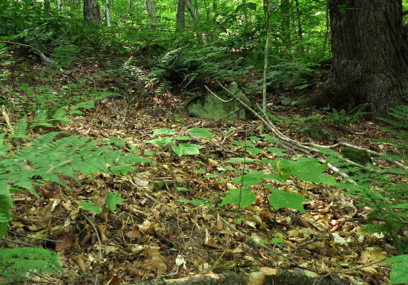 New England Forests New Film My Forest Has Worms