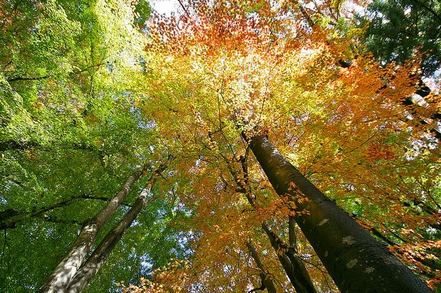 Ininatig trees
