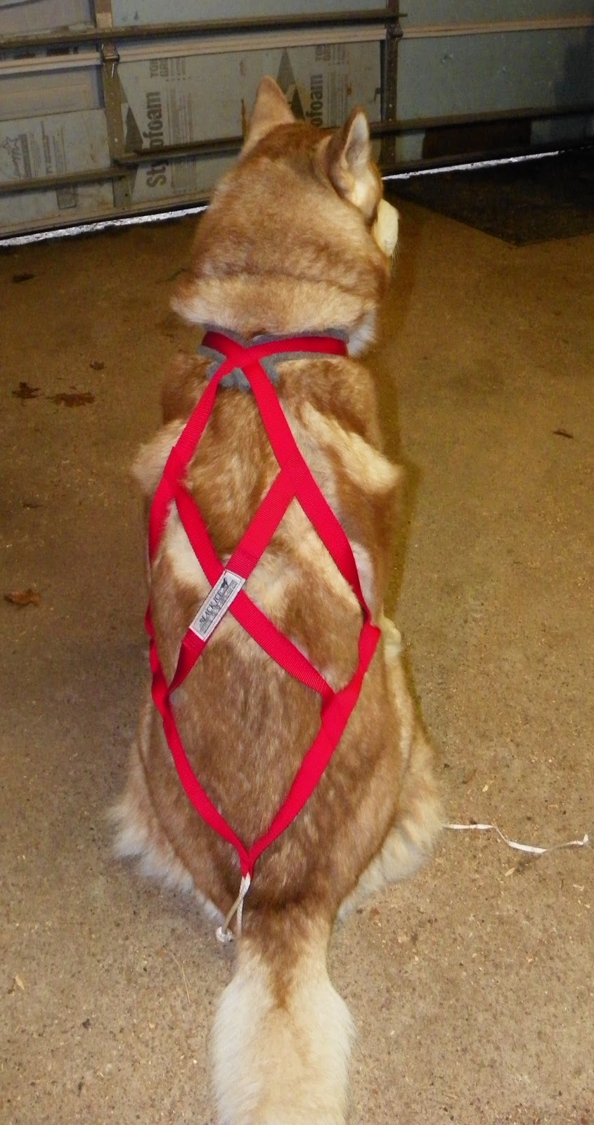 24 PAWS OF LOVE: Tools of the Trade-Sled Dog Harness