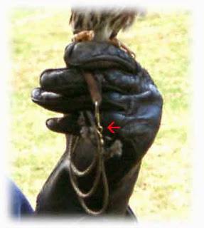 Istilah swivel dalam pemeliharaan burung hantu mengacu pada alat dari logam untuk menyatukan dua jesse