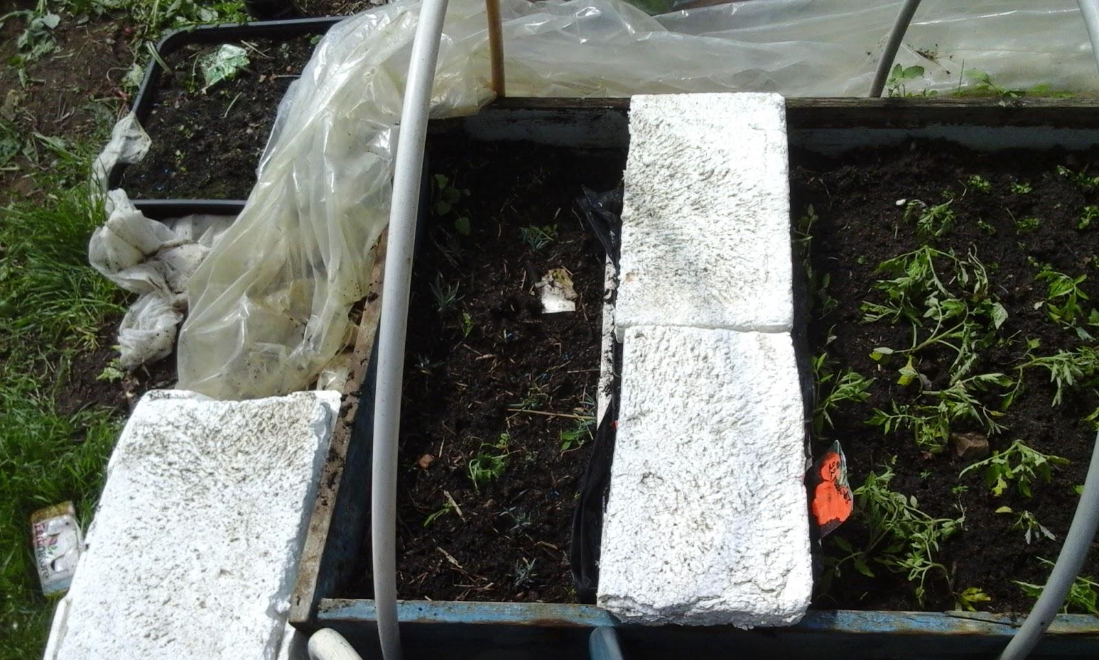 le potager des violettes semis serre 03 05 2016. Black Bedroom Furniture Sets. Home Design Ideas