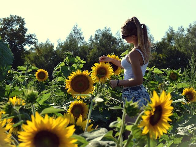 396. Sunflowers ♥