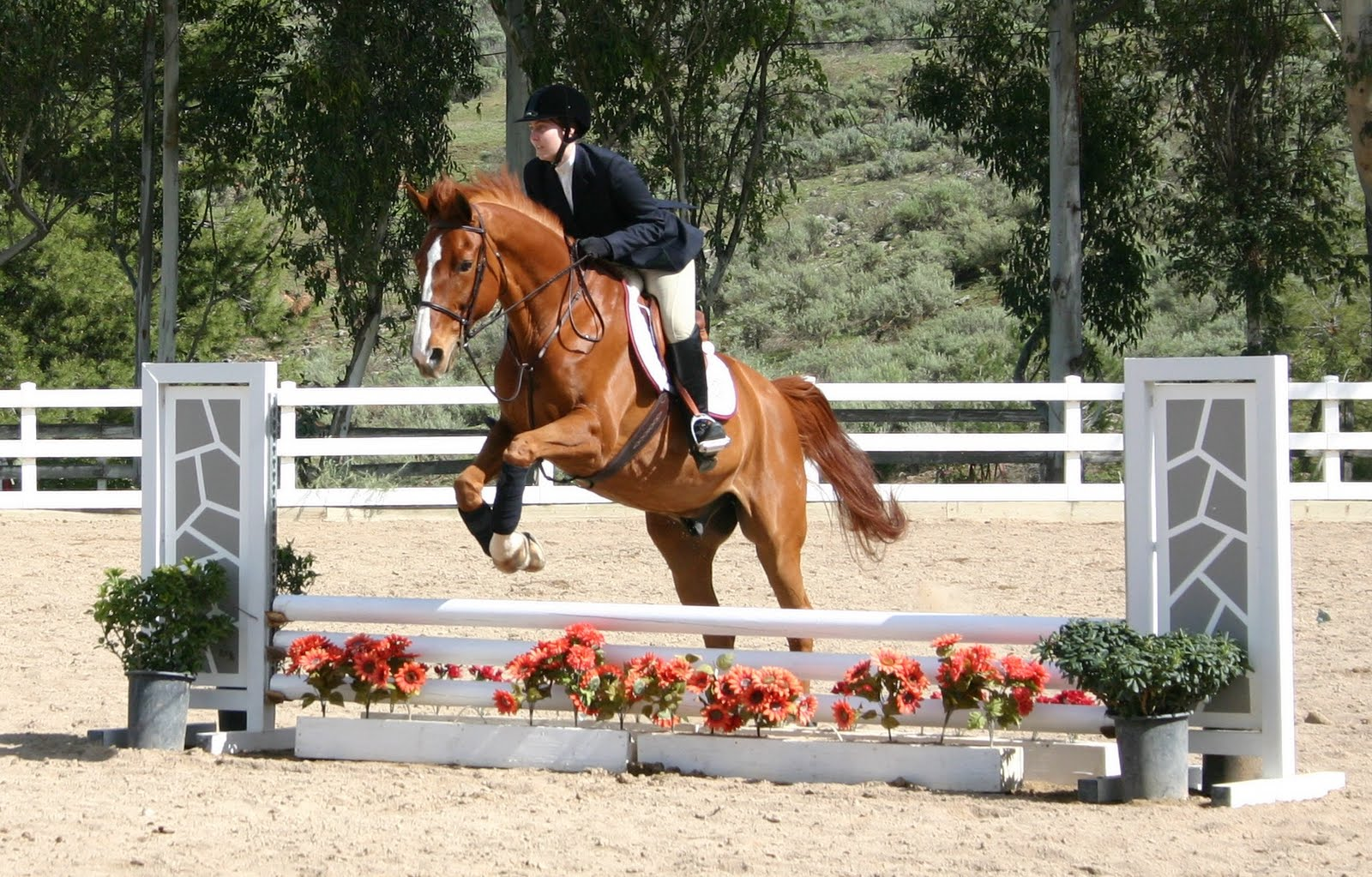 Equestrians final competition clinches region win - The