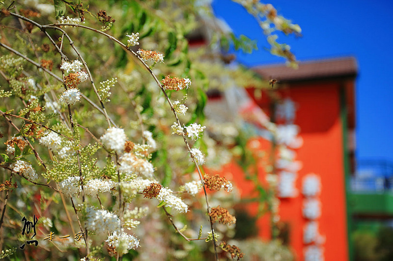 [南投清境明星開的民宿] 清境之星樂活民宿|環境~寬敞綠地花圃遊戲區和觀星露臺