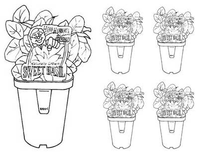 Printable Potted Basil Colouring Pages