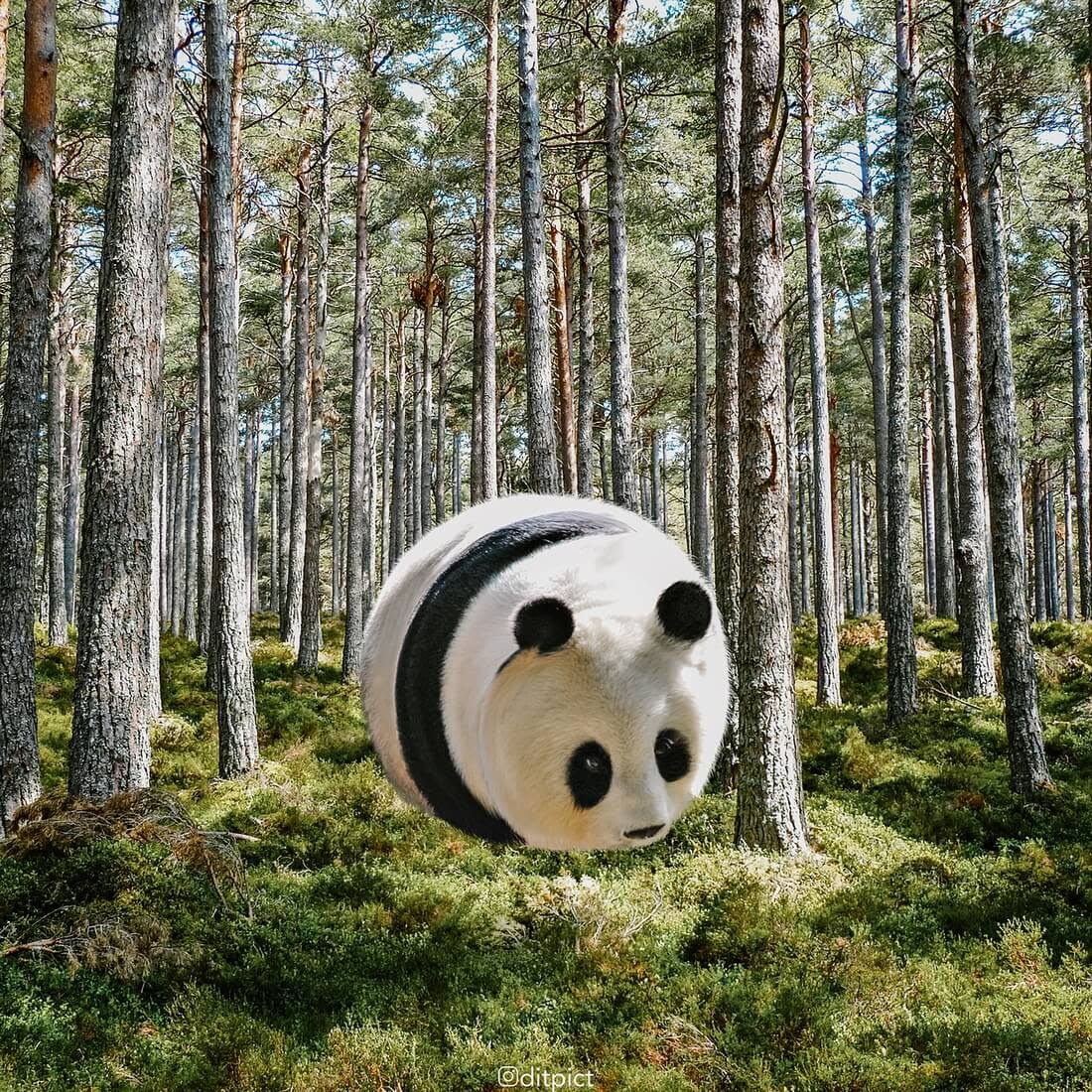 06-Panda-Aditya-Aryanto-Surreal-Animals-Ball-Photo-Manipulations-www-designstack-co