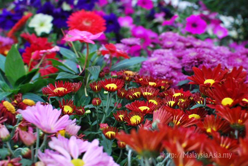 Putrajaya Garden Garden Ftempo