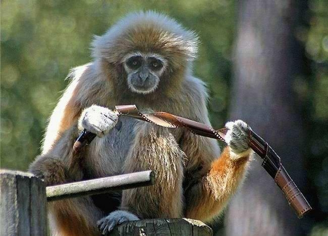 Philipino monkey happy after she receive iphone 3
