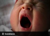La mayoría de las personas piensan que el bostezo se produce cuando estamos cansados, aburridos, tenemos hambre o porque hemos visto a otra persona hacerlo. Sin embargo, no existe ninguna evidencia científica para ello.Desde el punto de vista técnico, el bostezo sería una apertura bucal seguida de la inhalación profunda y lenta exhalación de oxígeno. Los científicos parecen coincidir en que es un reflejo de las vías respiratorias involuntarias que regula el dióxido de carbono y los niveles de oxígeno en la sangre. Estos reflejos son controlados por los centros de la columna vertebral y por los nervios. Una hipótesis