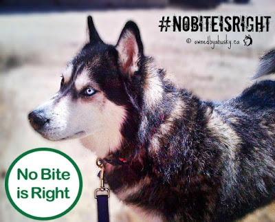 Protect Your Pet From Fleas And Ticks - #NoBiteIsRight