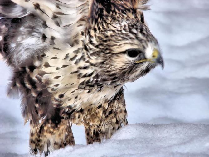 Know More About The Russian Wildlife Animal Info