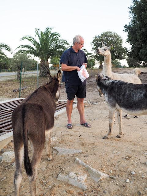 Riva Bella, dieren