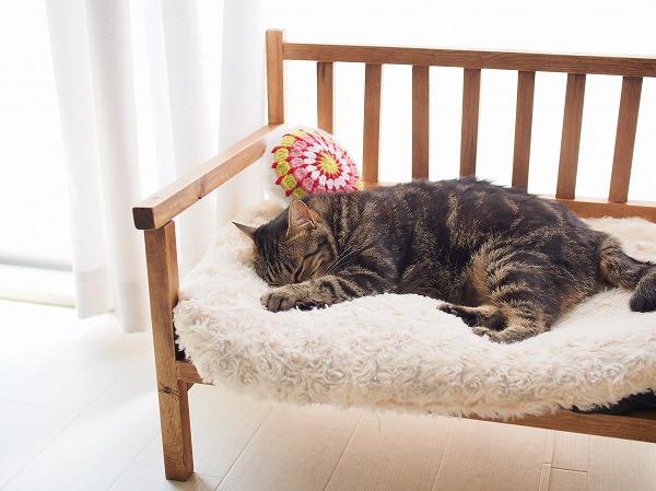 窓辺の猫用ベンチで昼寝をしているキジトラ猫