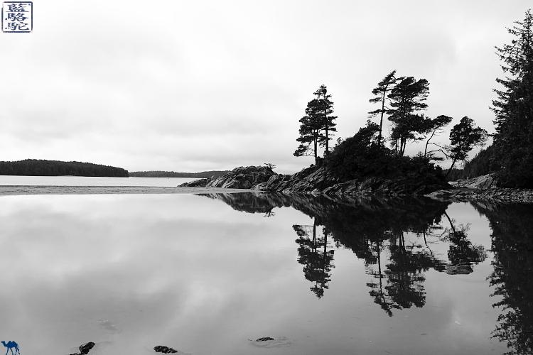 Le Chameau Bleu - Blog Voyage Tofino Canada -Vacances à Tofino Tonquine Trail Canada